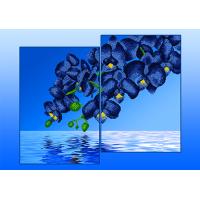 Орхидеи голубые