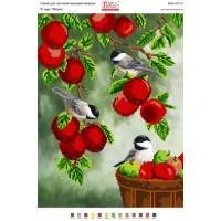 В Саду. Яблоки